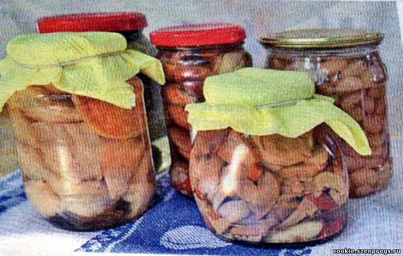 Рецепт тушеных грибов в сметане фото